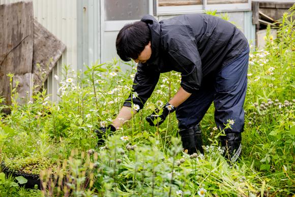 20210709まちジョブ草刈り003